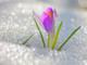 Весенняя смена с 16.03.13. по 23.03.13. в «Чайке»